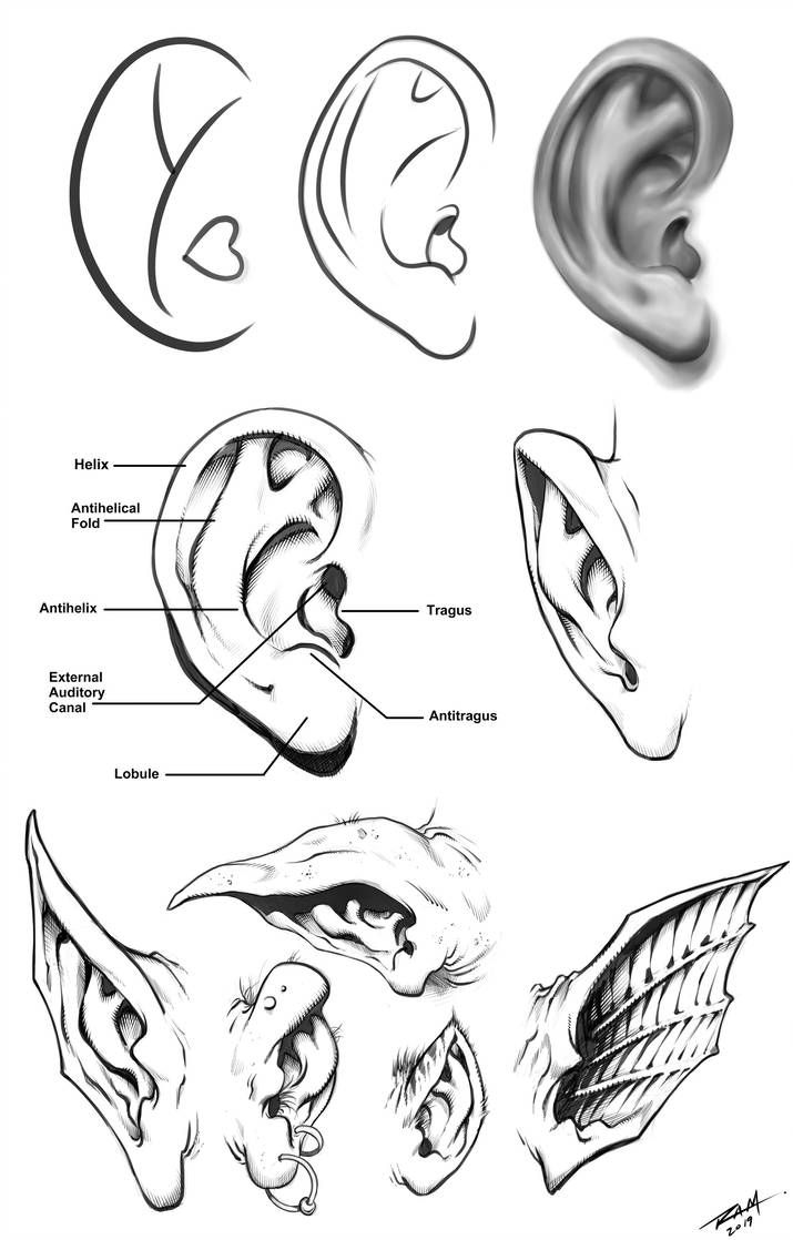 Human And Monster Ears Reference Sheet By Https Www Deviantart Com Robertmarzullo On Deviantart Monster Drawing How To Draw Ears Drawings