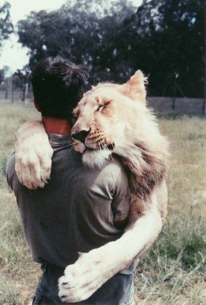Lion hug -- If you come up to me in suit you could be on the receiving end of one of these!
