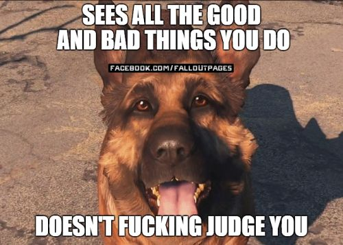 Why Dogmeat is the best follower  fallout fallout 4 dogmeat fallout companions fallout followers