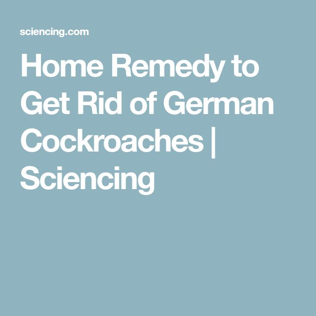 Home Remedy to Get Rid of German Cockroaches | Sciencing