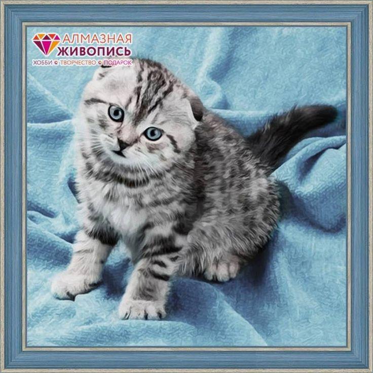 Шотландский кот вышивка