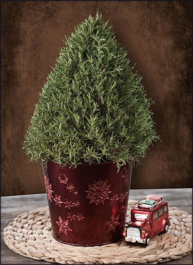 Rosemary Tree In A Festive Red Holiday Tin   FREE Shipping! $36.95. Garden  GiftsIndoor GardeningCredit