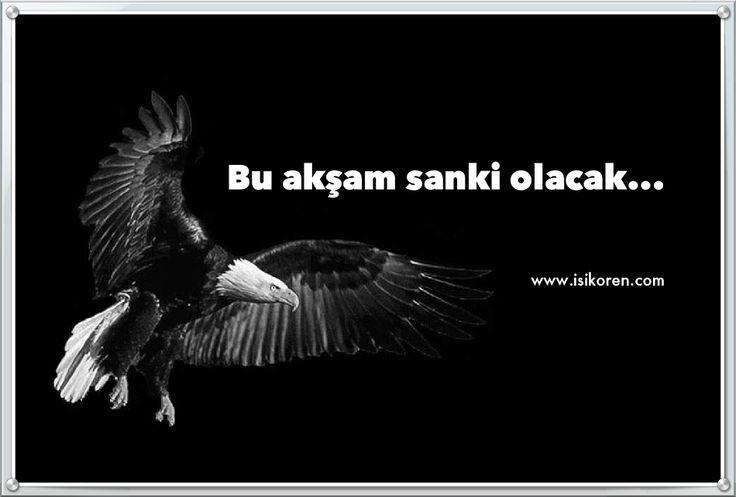 Bu akşam sanki olacak...  http://www.isikoren.com/kartal/ #Beşiktaş #Bjk #Spor #Futbol #Karakartal
