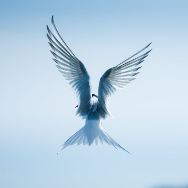 Sea and birds, Nina Lindfors.