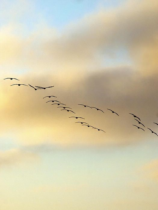 .Conscious Choice, John Denver E, 21 Pelican, Animals Birds, Joe Schofield, Outdoors Beautiful