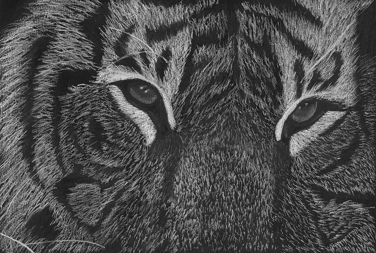 Art print of a black and white drawing of tiger eyes - pastel and charcoal drawing - animal drawing by Tracey Lee Everington by Traceyleeartdesigns on Etsy