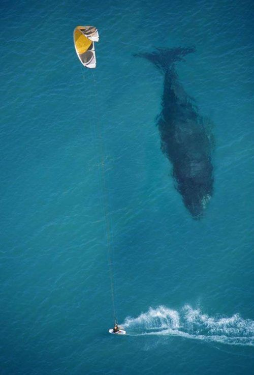 Windsurf near whales. May be lofty as I don't windsurf or live near whales...but that's why its on the list. Love this!