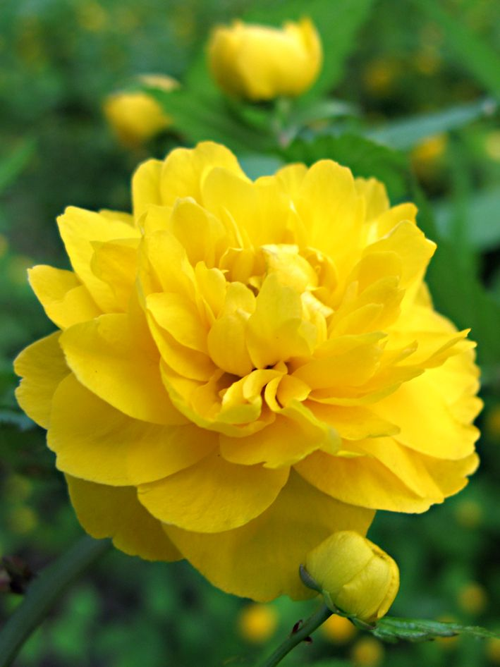 Find This Pin And More On Yellow Flowers