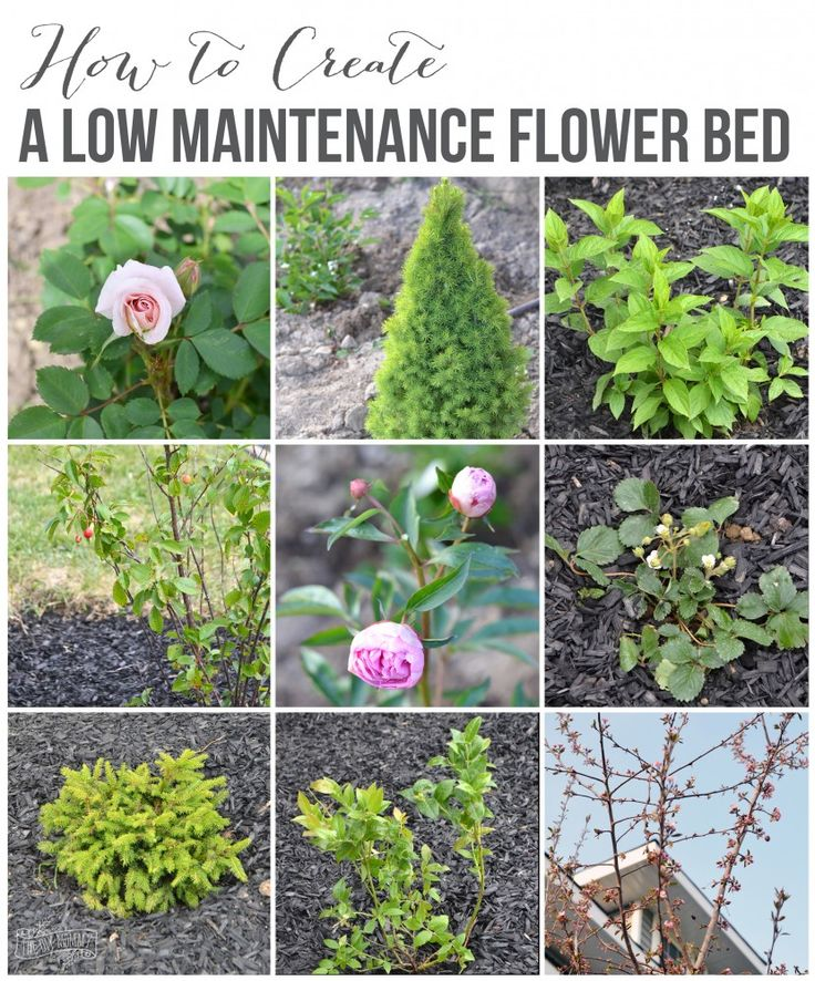183 best home garden exterior images on pinterest for Low maintenance flowers for flower beds