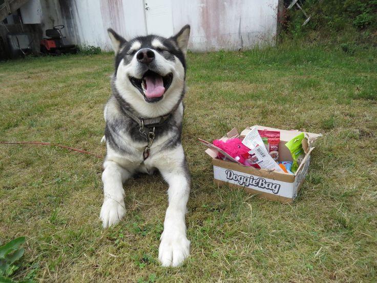 Vitani - DoggieBag.no #DoggieBag #Hund