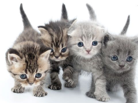 Kitten Care In The Early Stages Of Life | Pictures of Cats - Band of Cats