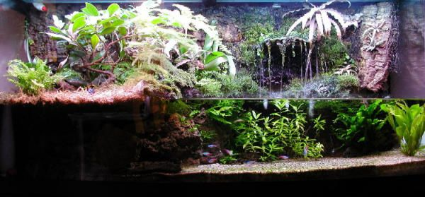 Diy terrarium waterfall google search pets for Construction aquarium