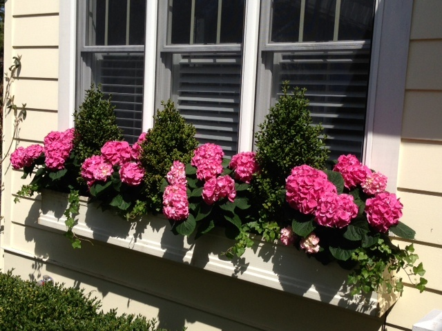 May Need To Do This With Fake Geraniums In My Newly