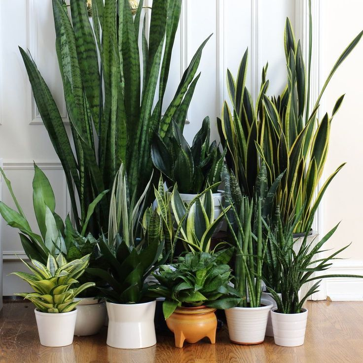 73 best Decorating with Plants images on Pinterest Sweet home