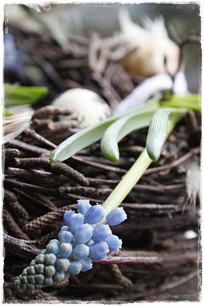 Paas krans met blauwe druifjes