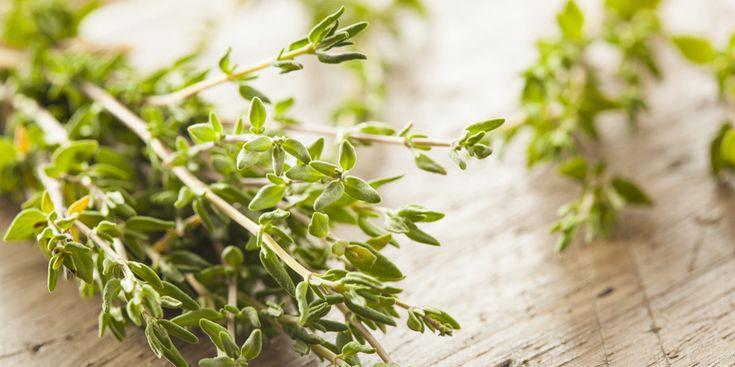 Die besten Heilmittel gegen Erkältungsbeschwerden sind in unserem Garten zu finden. Hier lesen Sie, welche Pflanzen gegen laufende Nasen und trockenen Husten helfen.