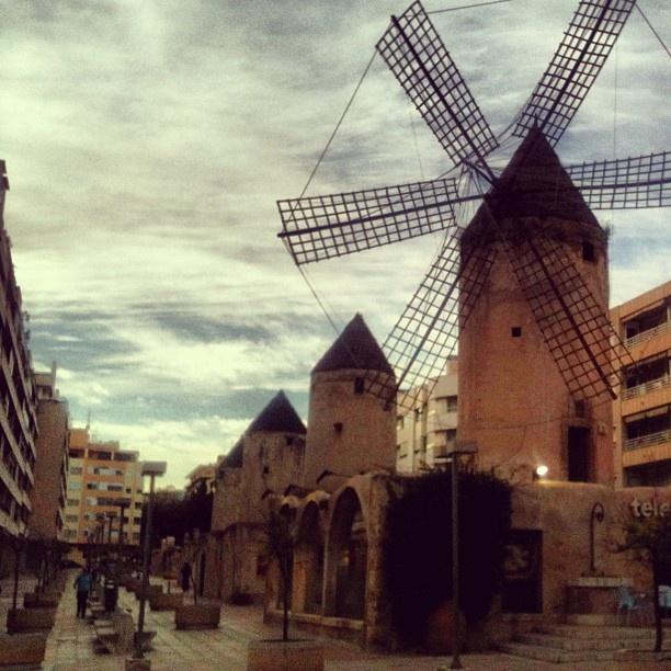 Mallorcalla työskentelevä oppaamme Mira kohtasi tuulimyllyjä keskellä Palman kaupunkia. Oppaan työviikkoon mahtuu satoja kohtaamisia. Useinmiten vastapuoli on hieman puheliaampi. :)