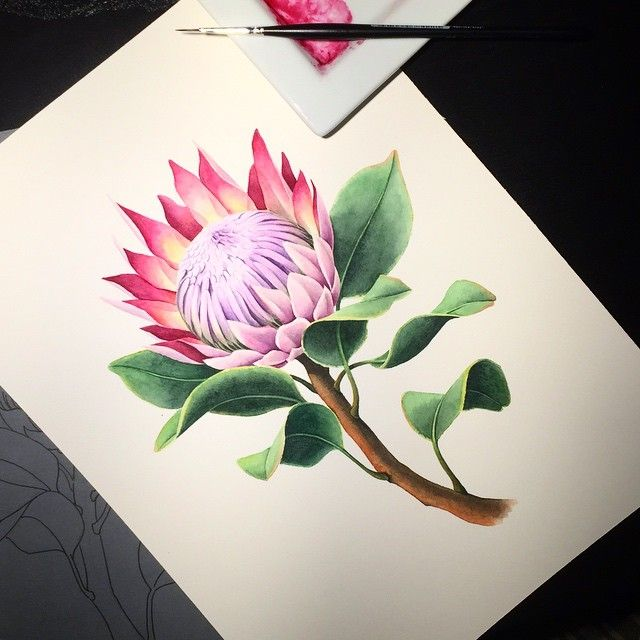 Протея для #80_flowers #kalachevaschool #акварель #watercolor #watercolorflowers #watercolor_flowers #botanical_watercolors #botanicalillustration #protea #art
