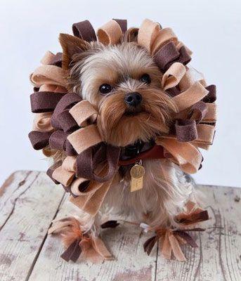 unique dog costumes | 20+ Dog Halloween Costumes | The Pet Anthology