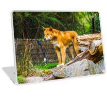 Dingo on the Alert Laptop Skin