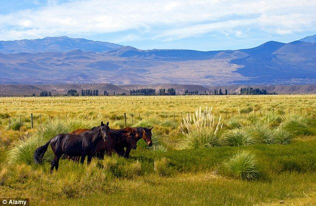 Horseplay: The cattle-rich plains of La Pampa are Argentina's fertile heart