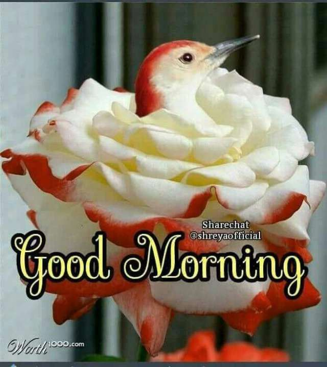 Good Morning Flower And Bird Flower Bird Morning Morning Greetings Beautiful Good Morning Quotes Good Morning Flowers Beautiful Morning Good Night Image
