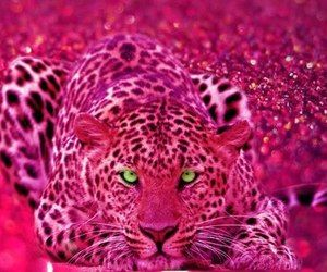 ☮✿★ Leopard ✝☯★☮   via Tumblr