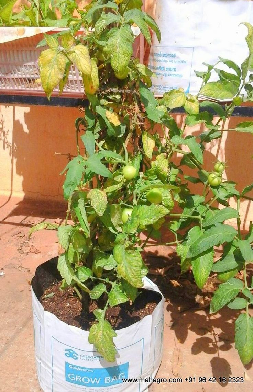 #mahagro #flowers #plants #green #garden #potting #mix #pottingmix #vegetables #organic #healthy #fruits #mahagro #flowers #plants #green #garden #potting #mix #pottingmix #vegetables #organic #healthy #fruits #veticalgarden #bottles #recycle #india #hyderabad #bangalore