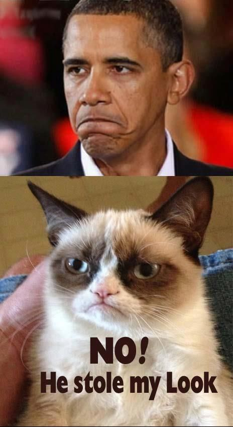 Oh how I wish we could let these two switch positions. The world would be in much better shape-yet alone our country. (Sorry though to grumpy cat's owners, but it would be for the good of the world!)