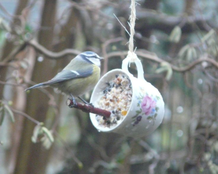 Take an old cup and make a birdfeeder. There is no website. I wonder what is holding the stick in? dot