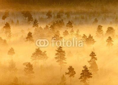 Misty Trees in the Morning ©Teemu Tretjakov
