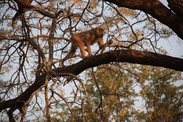 Just chillingggg  #Liwonde #National #Park #Malawi