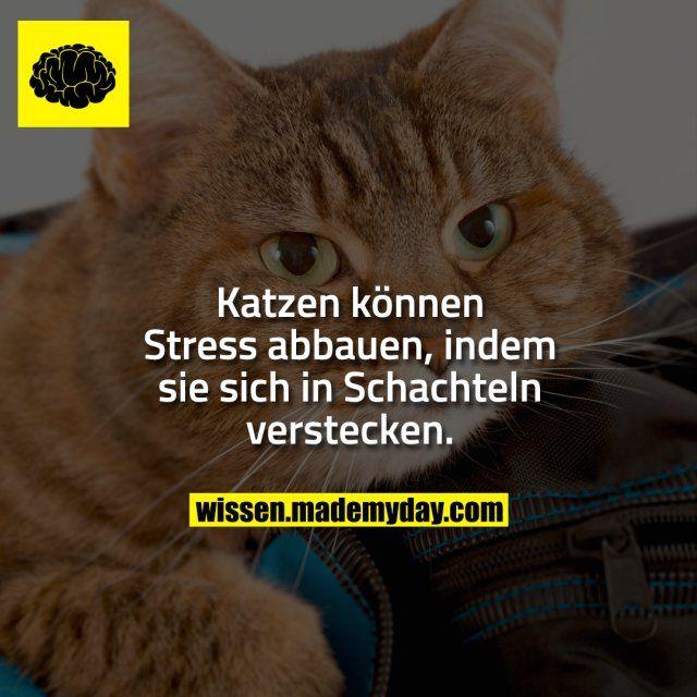 Katzen können Stress abbauen, indem sie sich in Schachteln verstecken.
