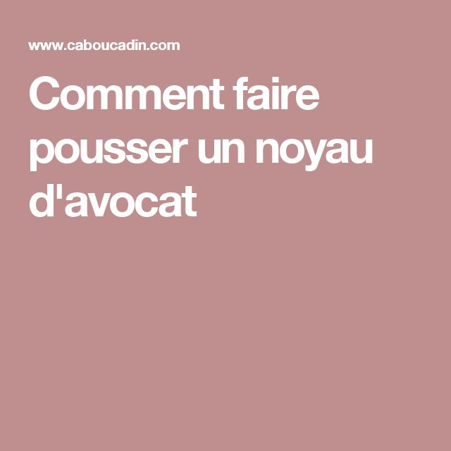 Best 25 faire germer un avocat ideas on pinterest noyau avocat noyau avocat and noyau avocat - Faire pousser un noyau d avocat ...
