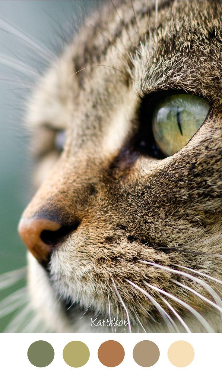 Meer dan 1000 ideeën over tijger ogen op pinterest   tijgers ...