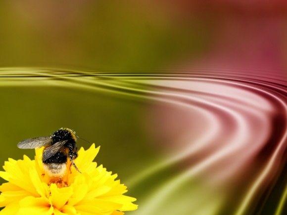 Virág - méhecske