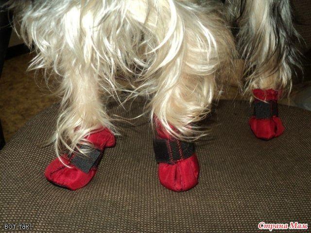 МК Алены Д. по пошиву сапожек для собаки http://www.minidog.info/ Выкройка Выкройка для КОНКРЕТНОЙ собаки. Внимание!!! У Вас могут быть другие размеры.