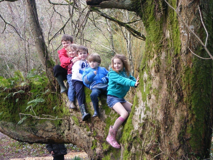 Climb one of the fabulous mature trees in our amazing woodland estate.