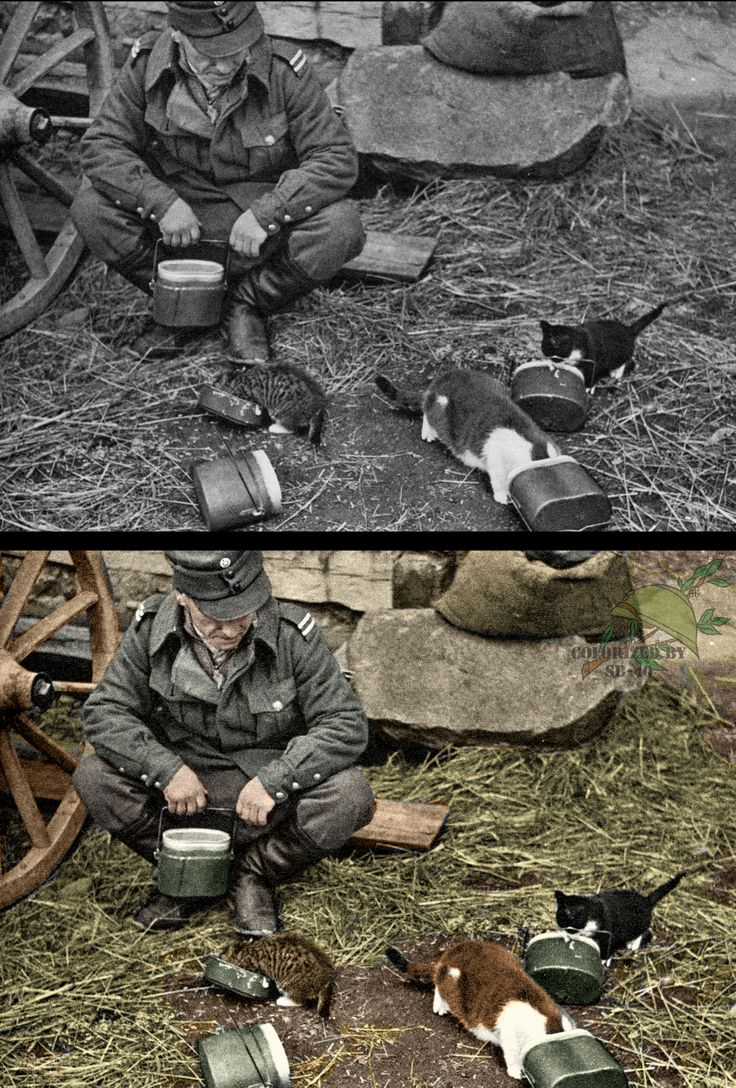 Finnish Soldier and Kittens WWII