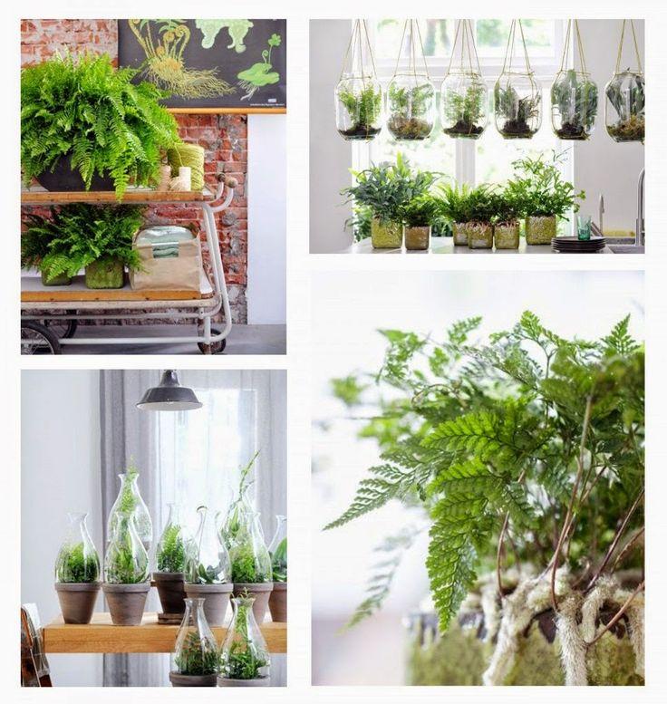 Plantas y Flores, plantas especies : Purificar el aire ambiente