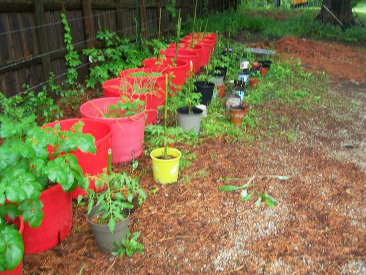 Cattle Mineral Tubs Container Garden