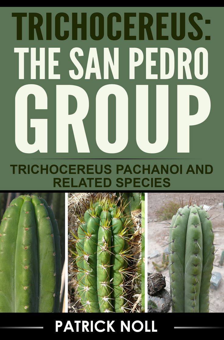 Buch: TRICHOCEREUS: THE SAN PEDRO GROUP - http://trichocereus.org/buch-trichocereus-the-san-pedro-group/