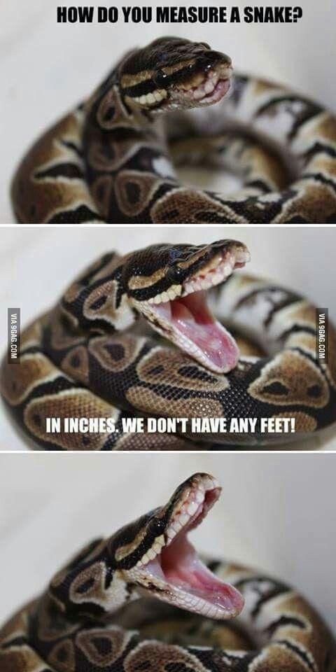 Funny snake lol