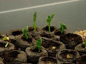 Urban Sustainable Gardening