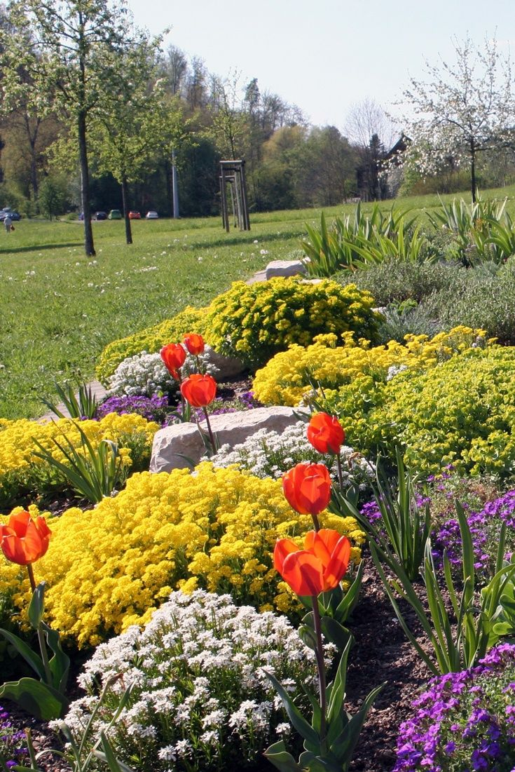 Pflanzen Fur Trockene Und Sonnige Standorte Garten Bepflanzen Steingarten Pflanzen Pflanzen