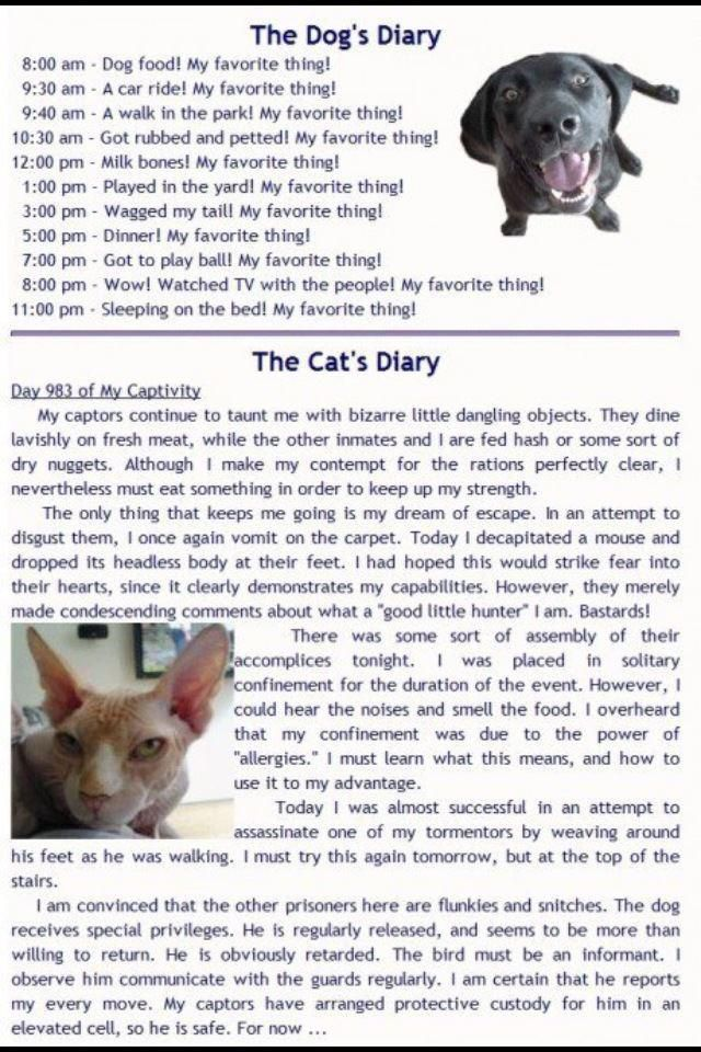 The difference between dogs and cats Cat diary, Funny, Cats
