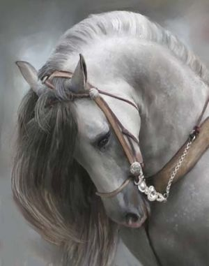 Andalusian Horse by Digirrl  Beautiful but I wish they wouldn't pull their head in so far!