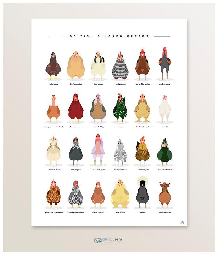 Chicken Poster Chicken Breeds Farm by AlsCouzensDesigns on Etsy