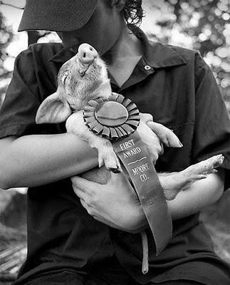 Smiling Prize Pig ;)
