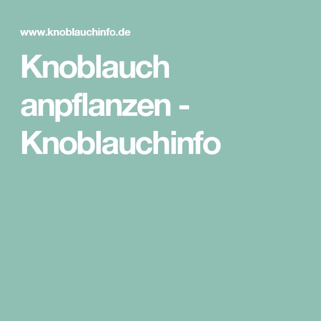 Knoblauch anpflanzen - Knoblauchinfo